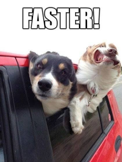 Funny dog meme - Faster - Funny Pictures, Funny jokes and so much more ...