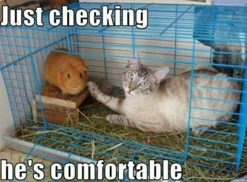 #cat #cute #funny #comfortable #hamster