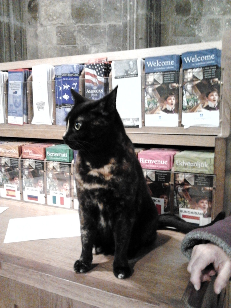 Tilly, a tortoiseshell cat belonging to the Assistant Organist of Canterbury Cathedral.   Freezing temperatures leading to her sitting on the Welcome Desk in the nave to keep warm!   18th January 2013.