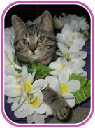 Image result for Maui Cat