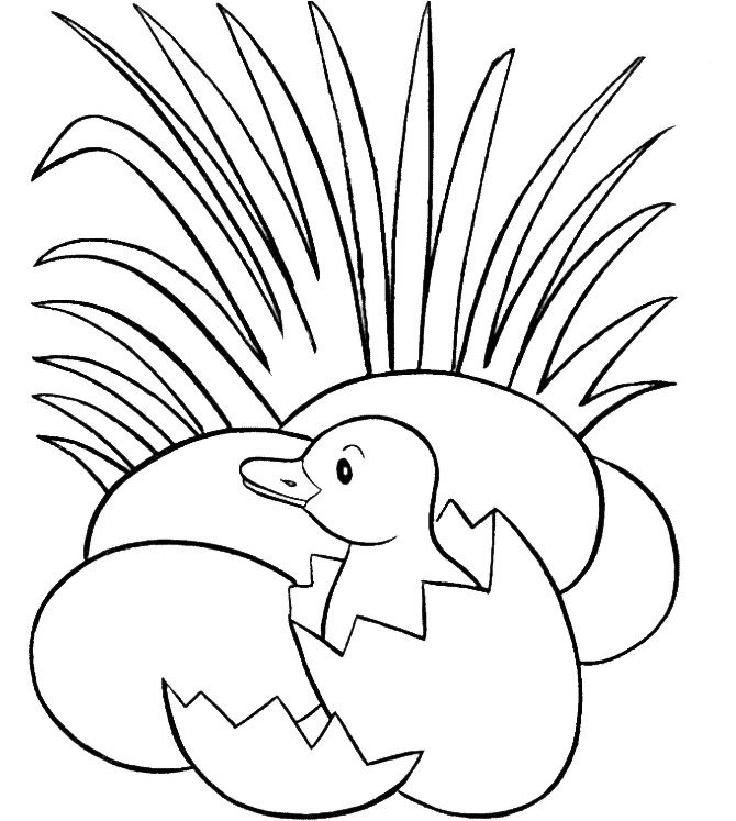 baby duck in a egg coloring pages kids coloring pages pinterest
