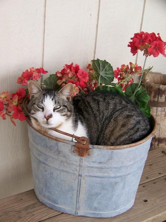 """My good luck bucket."" -- http://www.pinterest.com/backyardwillow/cats-are-kids-too/"