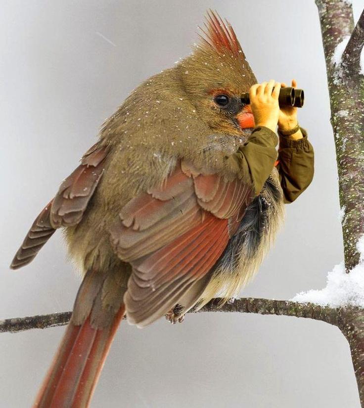 birdwatching 的圖片結果