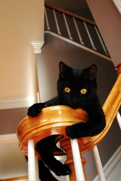 Yellow-Eyed Black Cat (via caitie.elle)