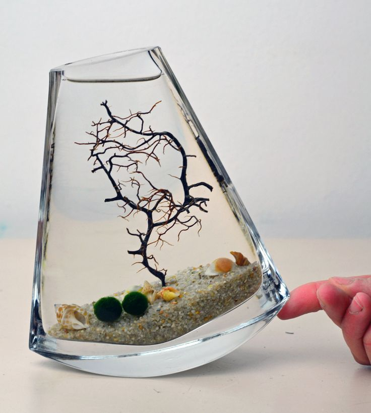Marimo Terrarium // Japanese Moss Ball Aquarium // Sea Fan // Shells // Sand // Green Gift // Home Decor. $33.50, via Etsy.