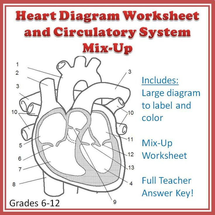 Cardiovascular System Mix Up And Heart Diagram Worksheet