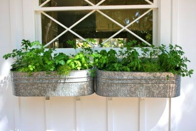 Herb window boxes in galvanized buckets.love it!