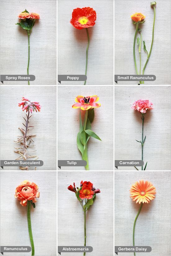 wedding flower guide  wedding ideas  nownowpolka, Beautiful flower