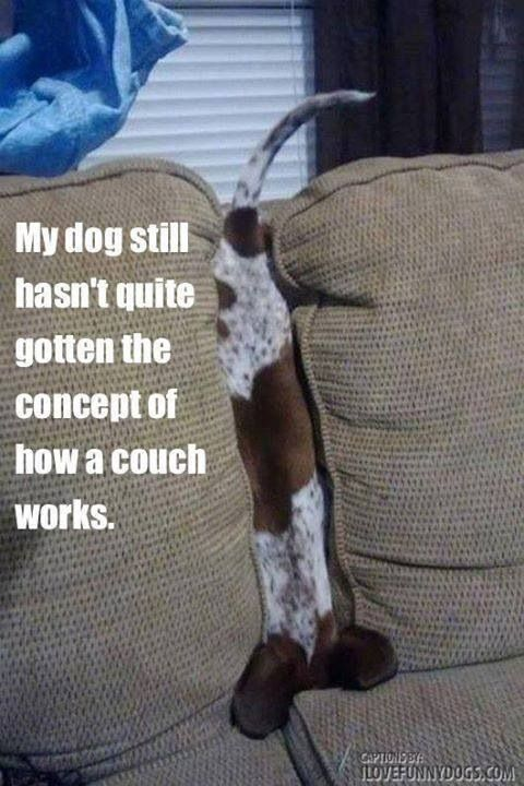 This is pretty much what my puppy does! Hahahaha!