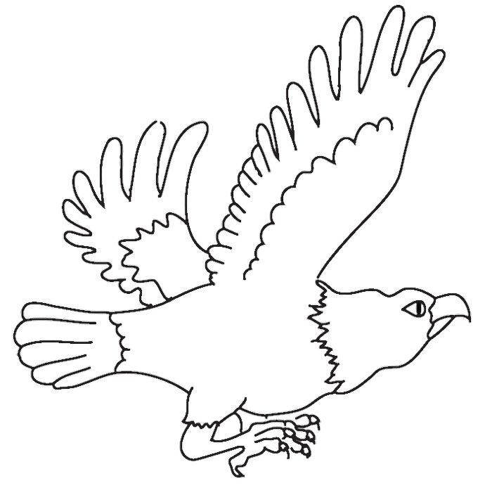eagle flying kids pinterest