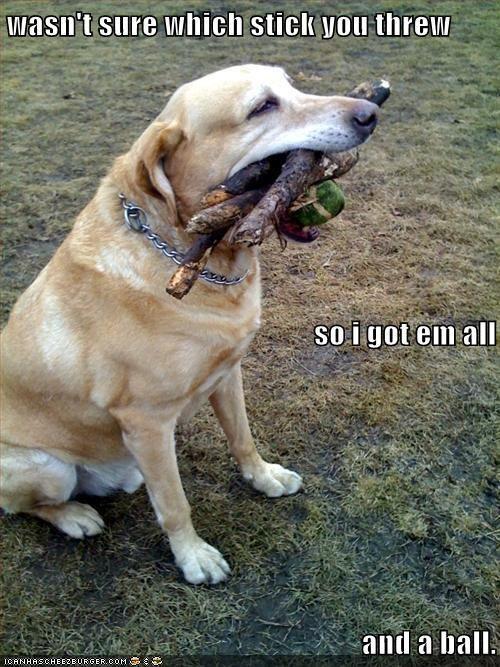:) #dog