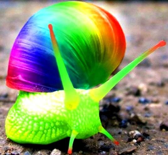 snail shell snail shell found on pinterest com