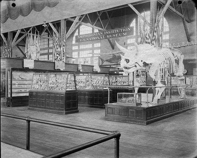 Smithsonian dinosaur skeleton
