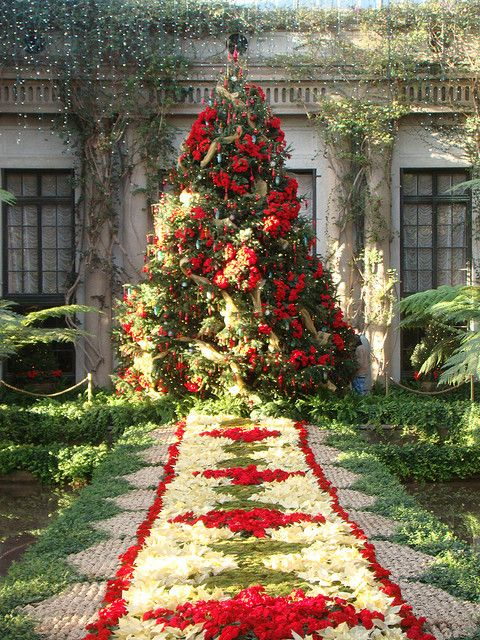 Deck the Halls, Longwood gardens, Pennsylvania. If you're a gardener, you must try to get there. It's one of the best I've seen in America. This is at Christmas when the huge conservatory is done wonderfully.