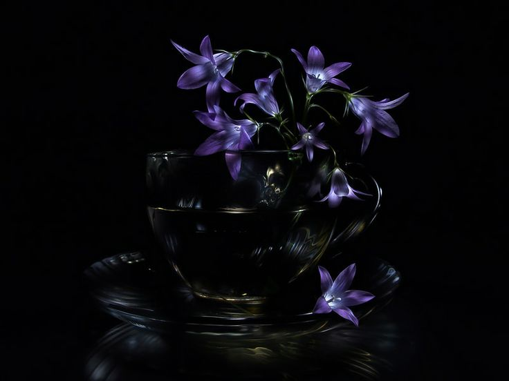 Bluebells, , lightpainting still life photo