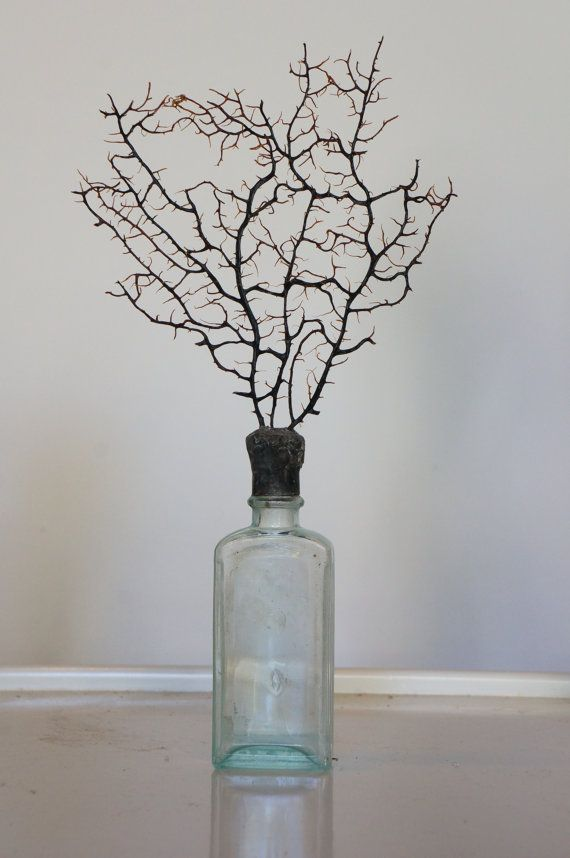 Soldered Sea Fan on Antique bottle by sharlenekaynedesigns on Etsy, $22.00