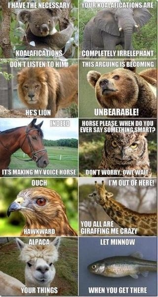 Silly animal jokes :)