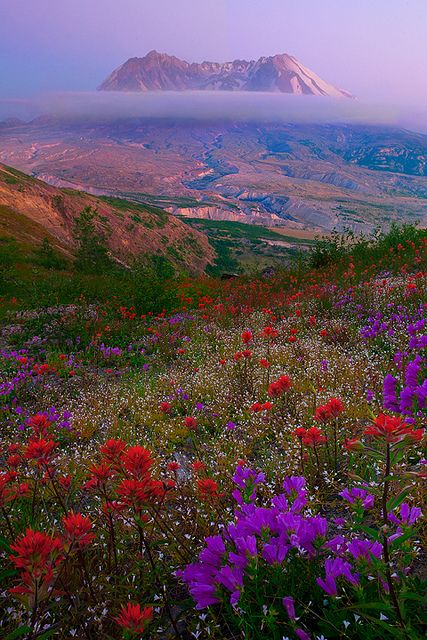 Mt. St Helens, Washington State