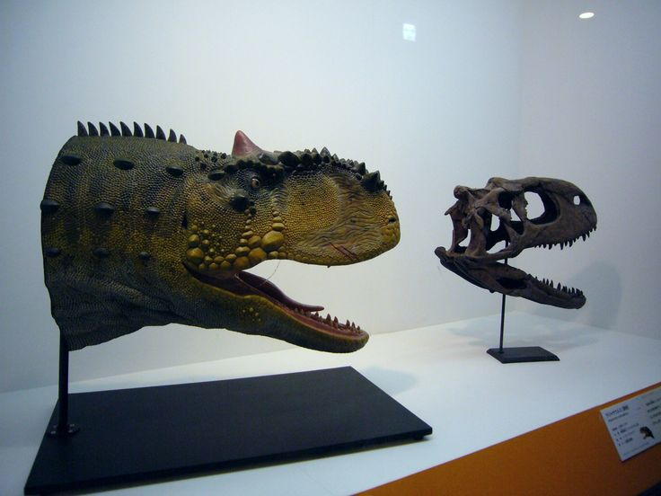 rajasaurus  f1.jpg (1800×1350)