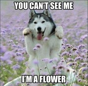 30 Funny animal captions - part 8, funny animal meme, animal pictures with captions, funny animal pictures