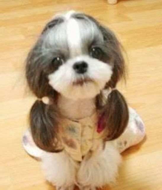 pets  | Funny dog hair do image.PNG