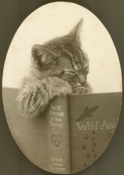 Cat with Book.