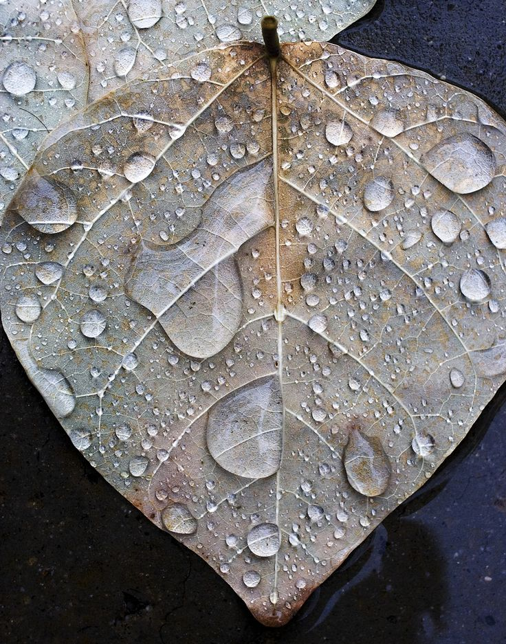 Leaf in Rain  By alan_sailer