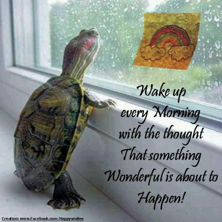 Be positive every day. And buy one of these little turtles because how stinkin cute is that!