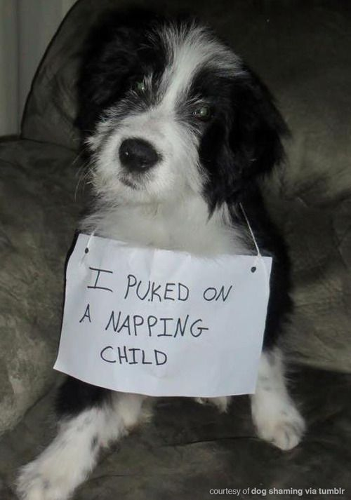12 Dogs Share Their Most Embarrassing Confessions