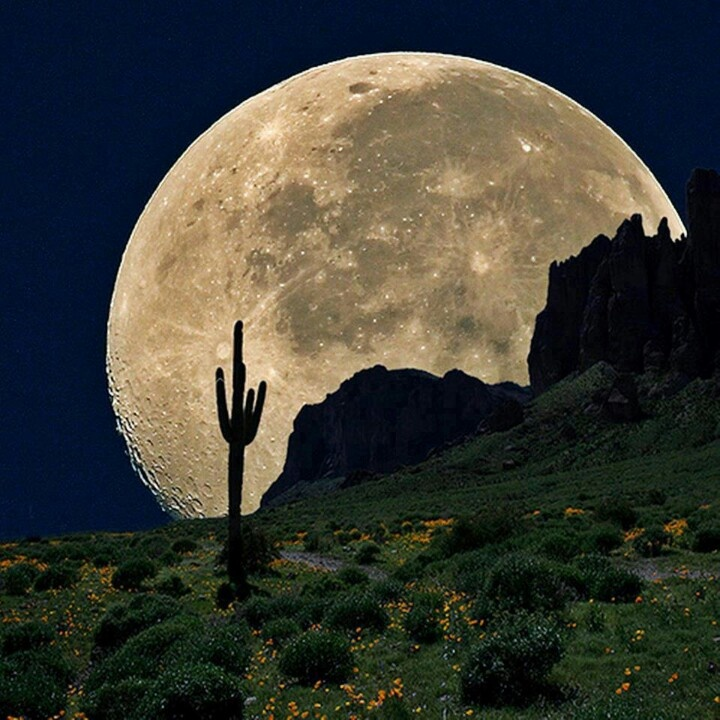 Image result for pics full moon lit desert