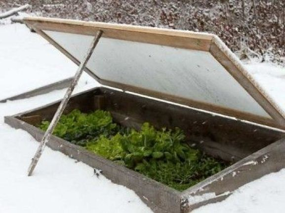 La neve protegge e, al tempo stesso, mette in pericolo le piante: una buona copertura nevosa isola il terreno come fa il pacciame
