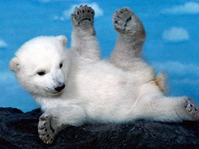 Very Cute Baby Animal | Selection of Very Cute Baby Animal Pictures | PieWay