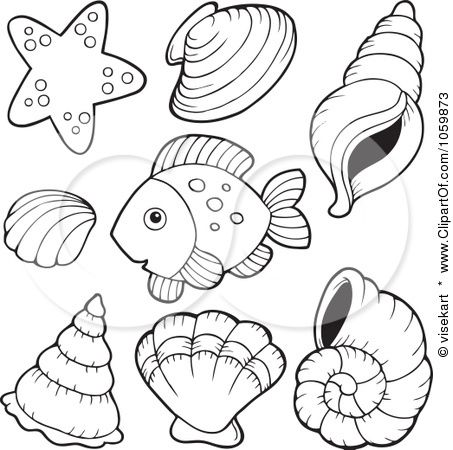conch shell colouring pages