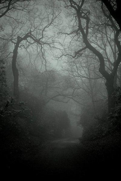 moody trees, spooky