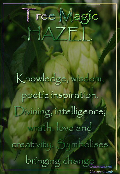 HAZEL Knowledge, wisdom and poetic inspiration. Divining, intelligence, wrath. love and creativity. Symbolises bringing of change