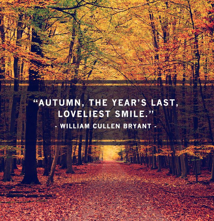 Quote about fall, and one I personally find so true. I enjoy the flowers of spring, but give me the autumn leaves and I am in bliss