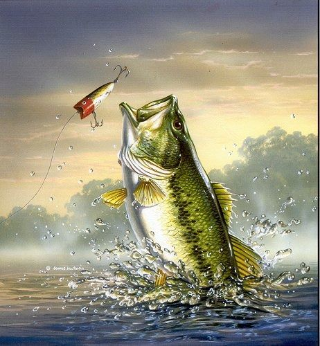 Free Bass Fish Pictures | Bass Fishing For Computer Wallpaper | PicsWallpaper.com