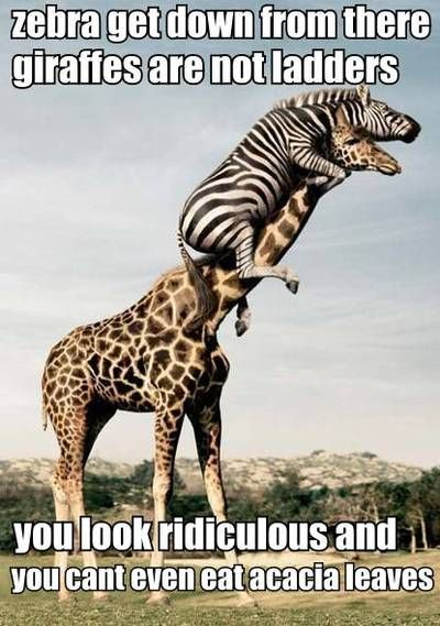 Silly Animals