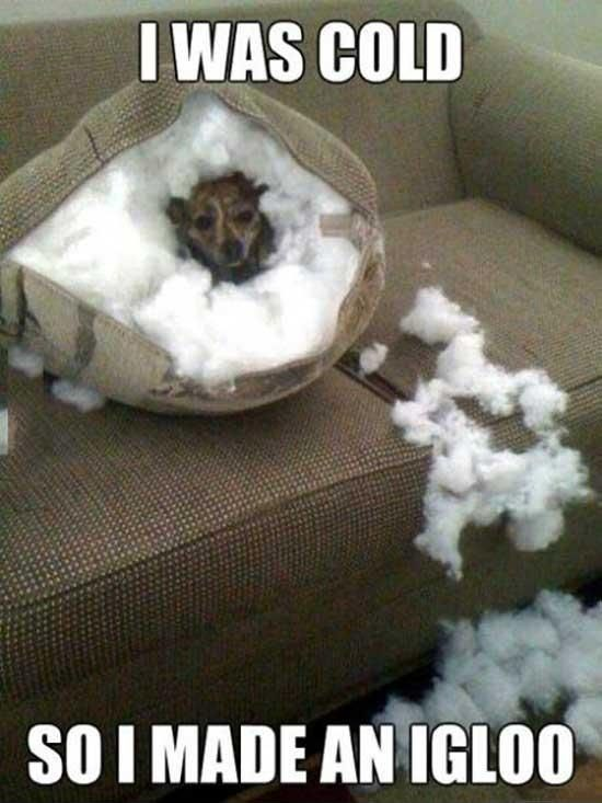 I was cold, boss - DayLoL.com - Your Daily LOL and Entertainment!