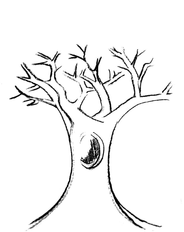 fall tree which no longer leaves coloring pages car pictures