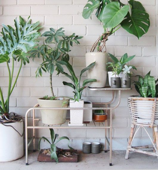plants..