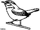 carolina wren coloring book pages embroidery birds pinterest