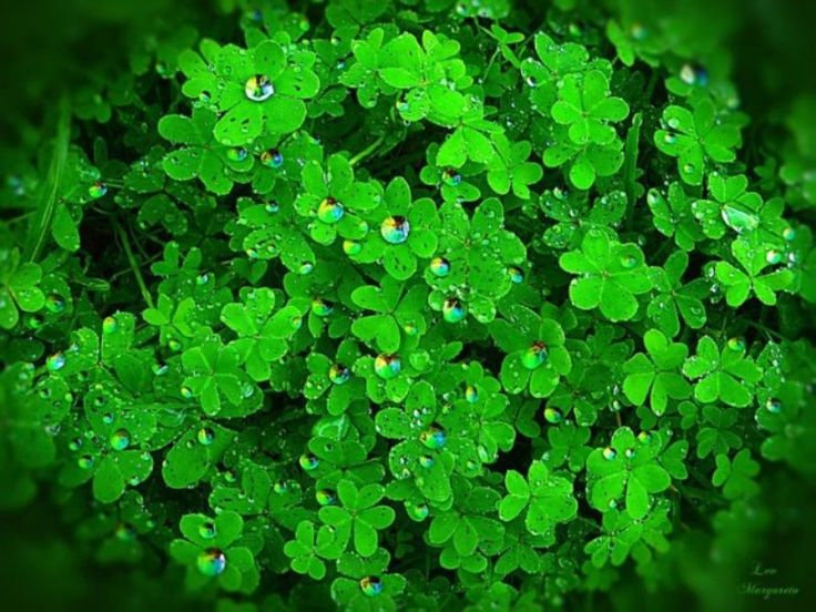 the rainbow tears color green breeze pinterest
