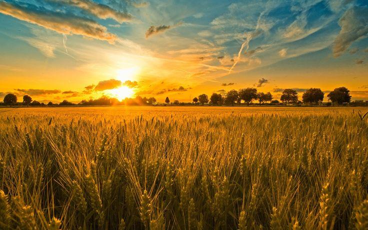 Season of Harvest