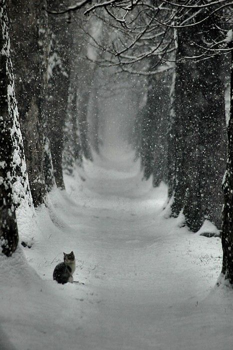 Wow...neat on so many levels...where did the cat come from? Where does the road lead? Lovely in black and white!
