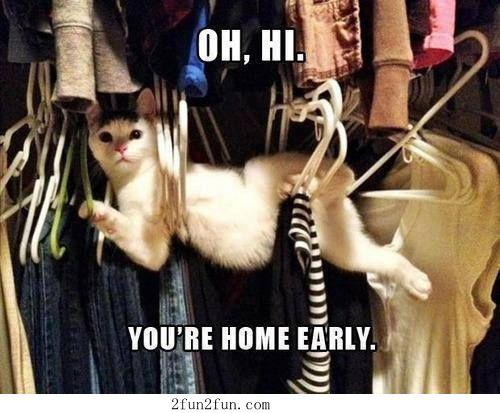 Funny cute cat