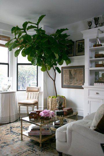 big ole house plant