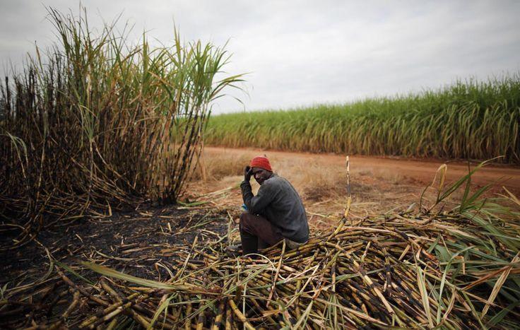 Un Komatipoort, in Sudafrica.  (Dan Kitwood, Getty Images)