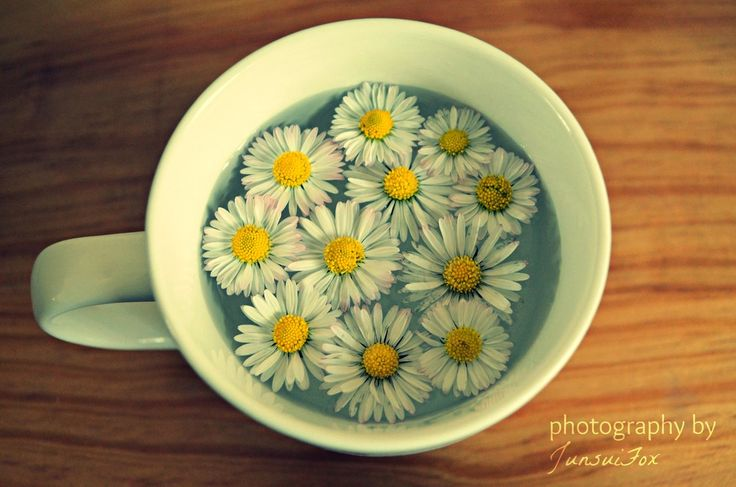 Cup of Daisies by JunsuiFox.deviant... on @deviantART