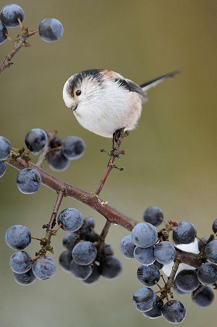 Mystery Bird of March 2013 - Pinterest/via Lara Probert